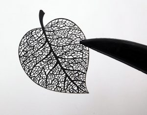 Black zircone leaf